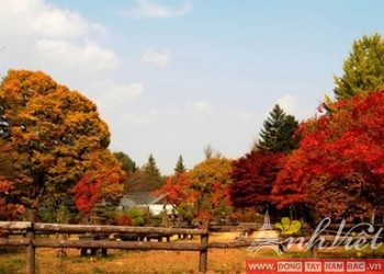 TourdulichHanQuocSeoul-Jeju-Everland6Ngay-anhviettourist5