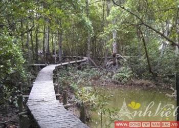 Can-Gio-Forest-Park-Monkey-Island-AnhVietTourist1